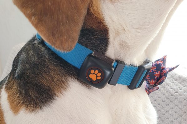 PitPat Attaches Easily To Your Dogs Collar