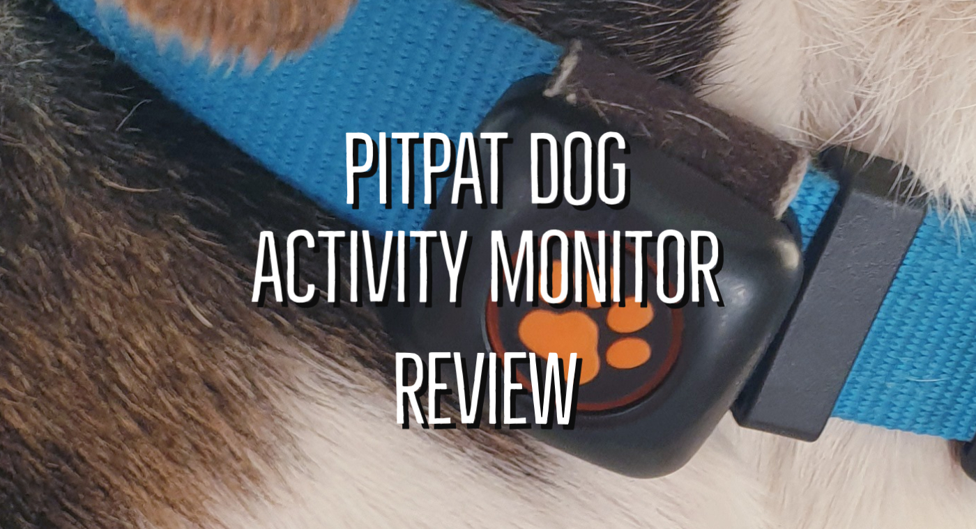 PitPat Dog Activity Monitor Review